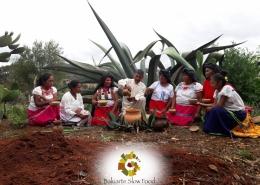 Maguey de la Mixteca Oaxaqueña